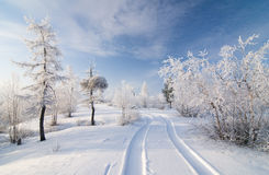 Winter forest. Trees in snow and beautiful sky Stock Images