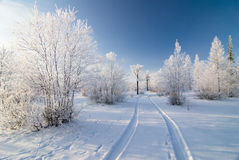 Winter forest. With road and beautiful sky Stock Photography