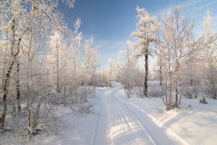 Winter forest. With road,  trees in snow Royalty Free Stock Photos