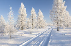 Winter forest. With road and clear sky over it Stock Images