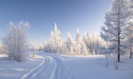 Winter forest. With road and clear sky over it Royalty Free Stock Photos