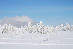 Winter forest. On top of the Shoria mountains Stock Image