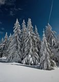 Winter Forest. In the mountains covered with snow Stock Photo