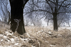 Winter forest. Winter landscapes, snow-covered trees Stock Photography