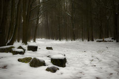 Winter forest. Beautiful forest in dreamy winter snow with basalt rocks in the foreground Stock Photo