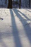 Winter forest. The dark tree trunks and shadows on the snow Royalty Free Stock Image