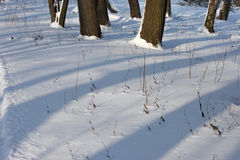 Winter forest. The dark tree trunks and shadows on the snow royalty free stock photography
