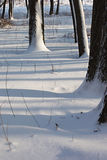 Winter forest. The dark tree trunks and shadows on the snow Stock Photography