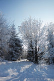 The winter forest Royalty Free Stock Photography