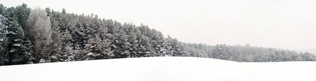 Winter forest. Somewhere in Poland Stock Photos