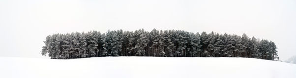 Winter forest. Somewhere in Poland stock images