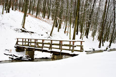 Winter in the forest Royalty Free Stock Photography
