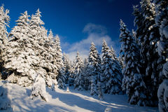 Winter forest. Beautiful winter sunny day in the mountains (Carpathians Stock Photo