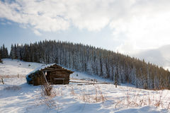 Winter forest. Beautiful winter sunny day in the mountains (Carpathians Stock Image