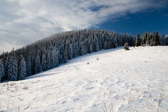 Winter forest. Beautiful winter sunny day in the mountains (Carpathians Stock Images
