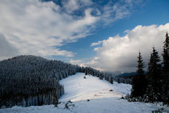 Winter forest. Beautiful winter sunny day in the mountains (Carpathians Royalty Free Stock Photography