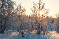 Free Winter Forest Royalty Free Stock Photos - 18666768
