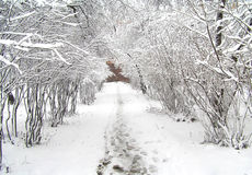 Free Winter Forest Royalty Free Stock Photo - 18967975