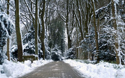 Winter forest. Winter scene in the forest with snow on the trees and a long way stock photo