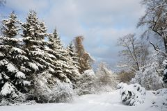 Winter forest Stock Photography