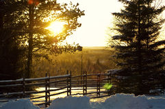 Winter forest. Evening sunlight in the winter forest Stock Photos