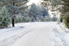 Winter forest. With road and snow Royalty Free Stock Photography