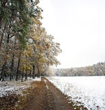 A winter forest Royalty Free Stock Photography