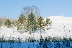 Winter Forest Royalty Free Stock Photos