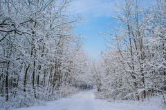 Winter forest. Beautiful winter landscape with snow covered trees Royalty Free Stock Photo