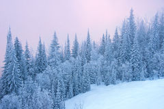 Free Winter Forest Stock Photo - 37429740