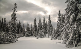 Winter forest. On Sureanu mountain Royalty Free Stock Photos