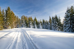Winter forest. Forest covered by snow, sunny day royalty free stock image