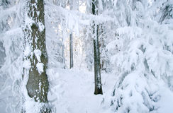 Winter forest. Forest completely covered by snow stock image