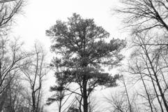 Winter in the forest. B&W pic of a neighborhood while snowing Royalty Free Stock Photos