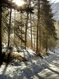 Winter Forest. Stunning winter forest trees with fog and sun star creating atmosphere - Laghi di Fusine - Tarvisio (Italy) 2008 Royalty Free Stock Photography