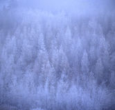 Winter forest. The monochromatic forest in winter Royalty Free Stock Photography