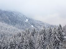 Winter forest. Forest and mountain in fog captured in winter Stock Photo