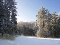 Winter forest Stock Images