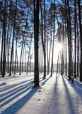 Winter in the forest Stock Images