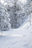 Winter forest. With many snow stock photo