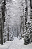 Winter in the Forest Royalty Free Stock Image