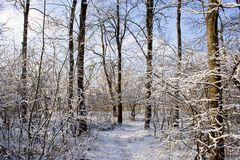 Winter Forest. Trees and ground covered with snow Stock Photography