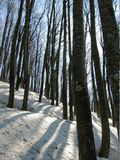 Winter forest. In Caucasus mountains,Russiav Stock Photos