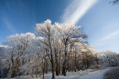 Winter in forest royalty free stock image