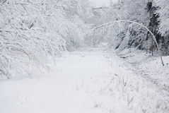 Winter in forest. Forest road  with white snow in winter Stock Photo