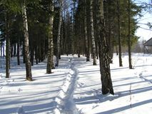 Winter forest. Russian forest Royalty Free Stock Photos
