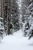 Winter forest. The background with winter forest Royalty Free Stock Photography