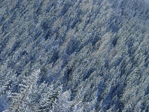 Free Winter Forest Royalty Free Stock Photo - 9426505