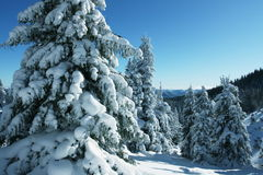 Winter in forest Stock Images