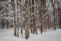 Winter forest abstract Stock Image